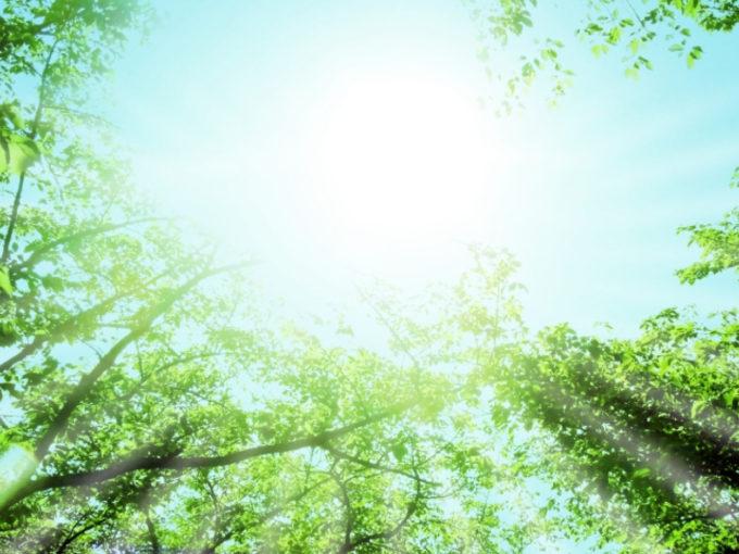 森 憩い 緑 太陽