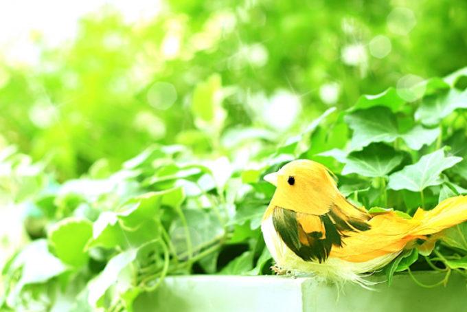 新緑 小鳥