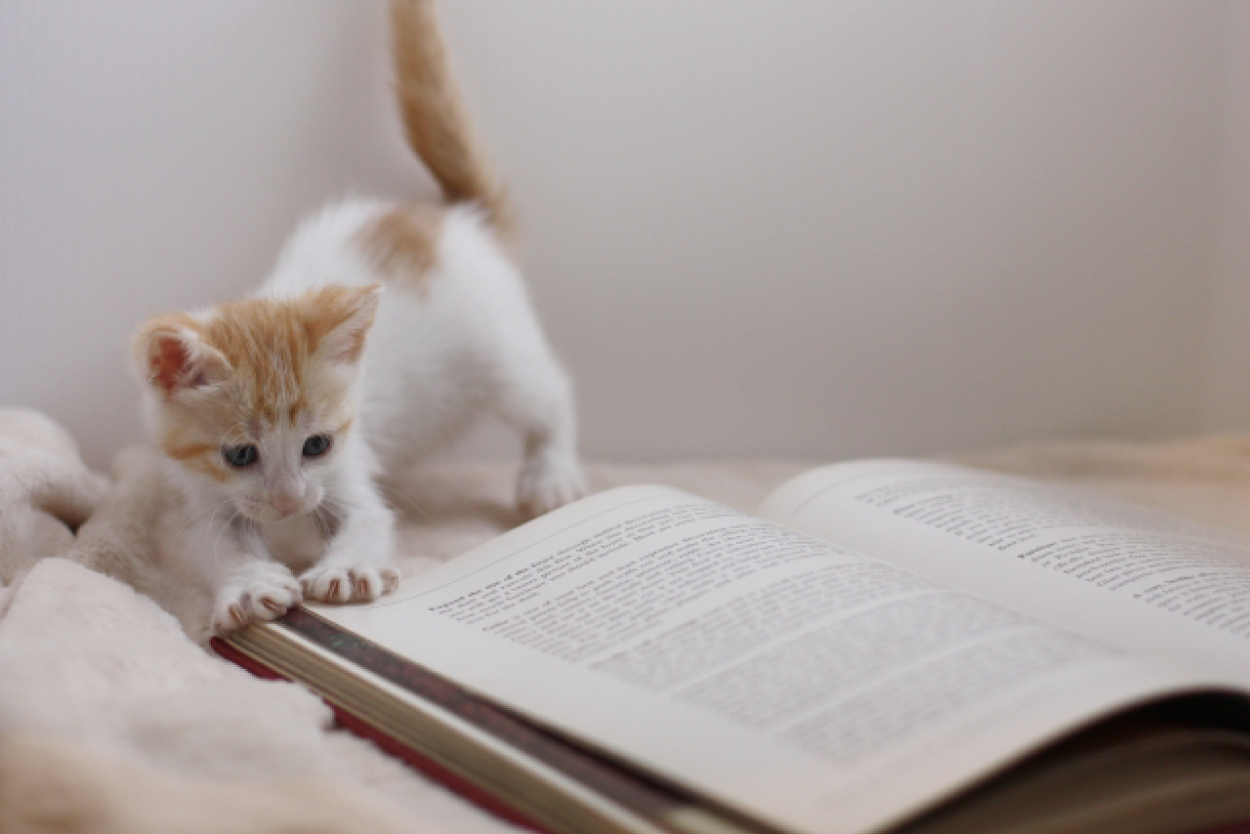 読書 ネコちゃん ねこのあくび