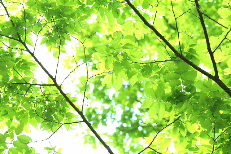 森林 葉 日差し
