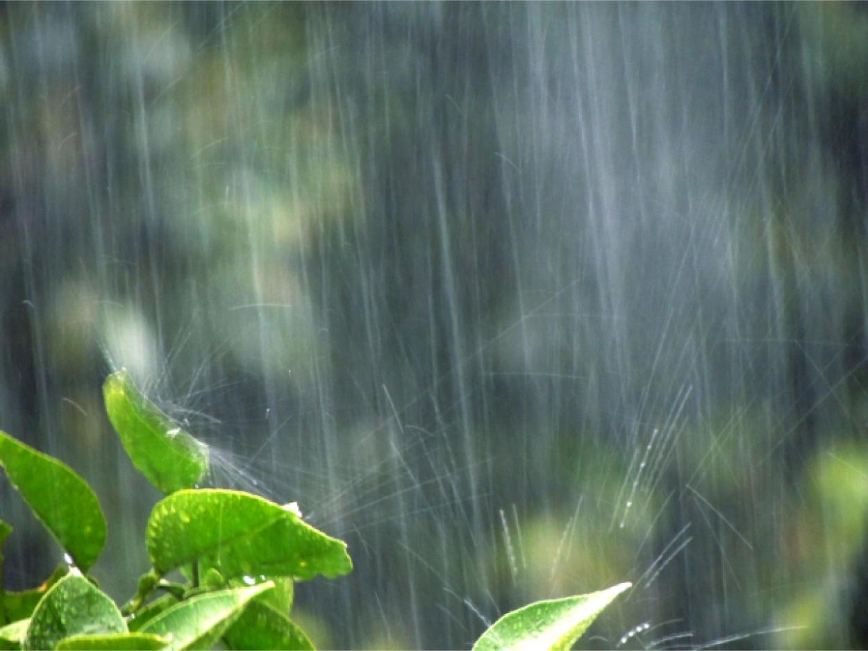 雨 緑 水滴