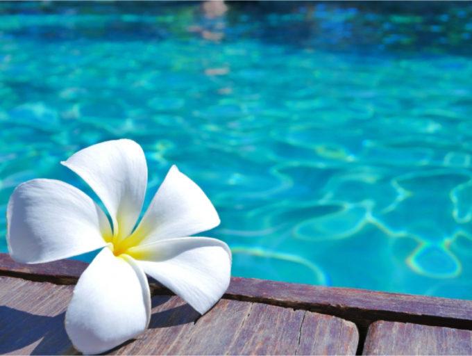 花 プルメリア 水