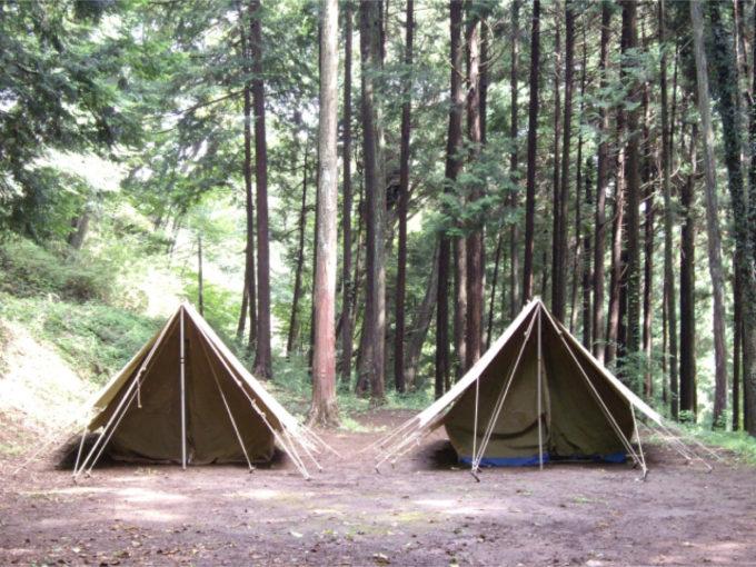 キャンプ 森