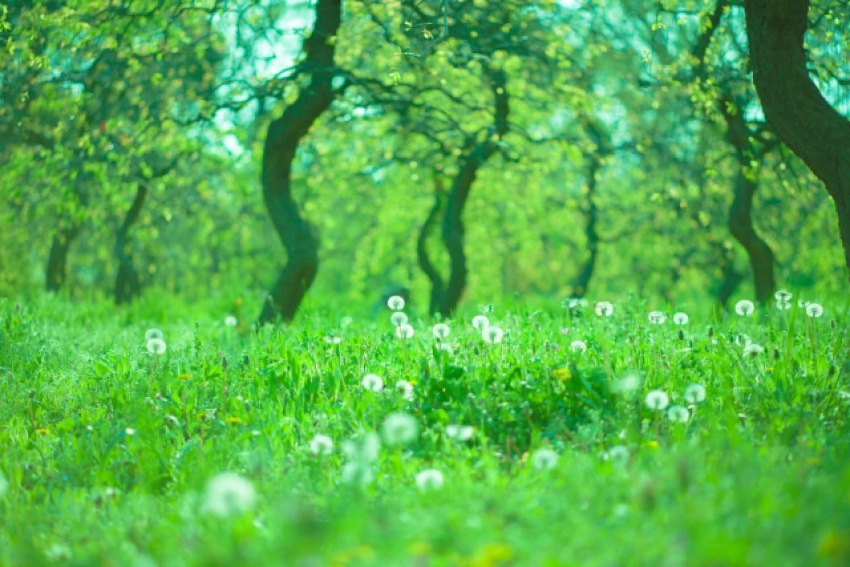森 森林 緑