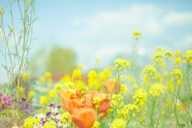 草原 草花