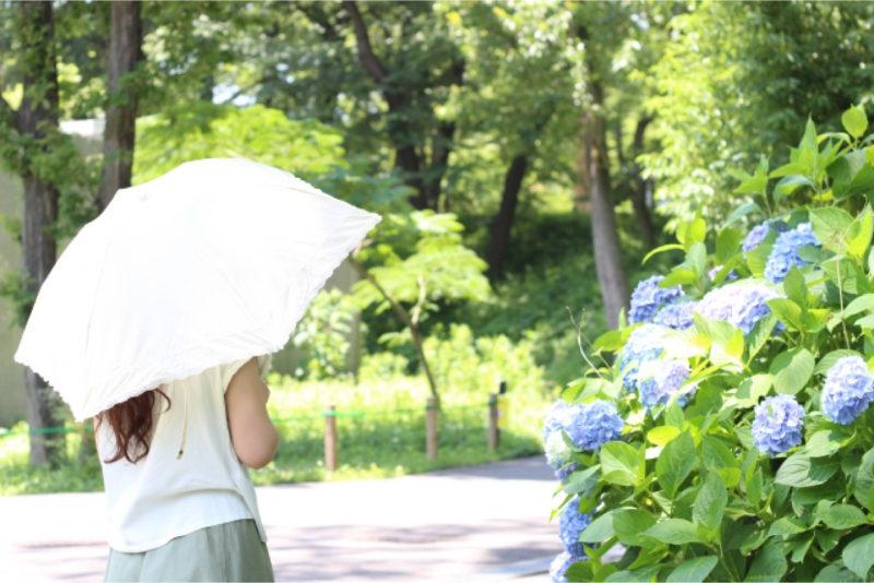 日傘 女性 緑