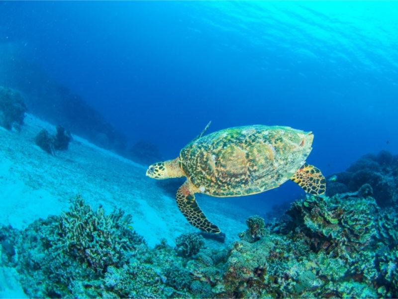 海 エメラルドグリーン ウミガメ