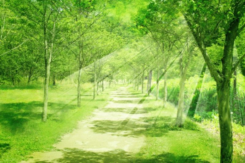森 森林、自然 光