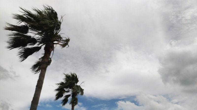 風 強風 台風
