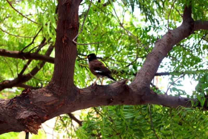 野鳥 森 木