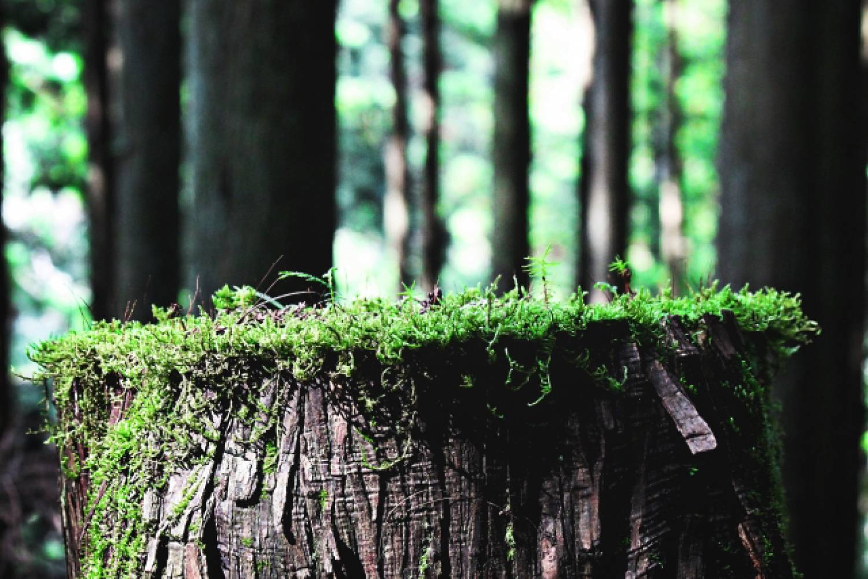 森 木 切株