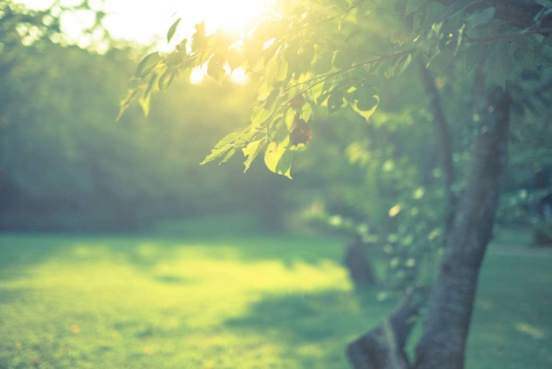 緑 木々 森