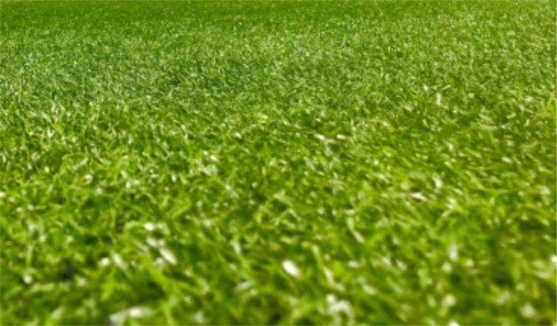 サッカー グラウンド 芝