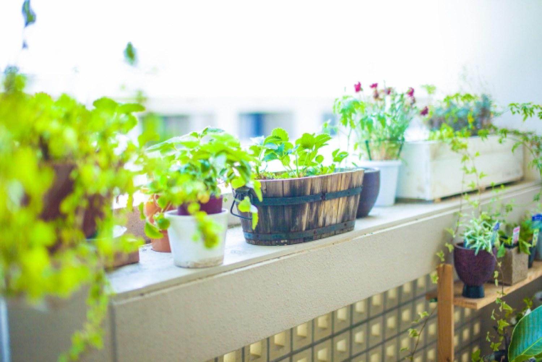 家 キッチン 観葉植物