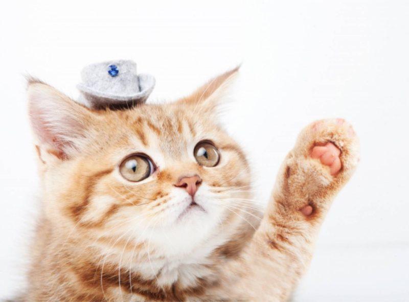 猫 動物 ペット